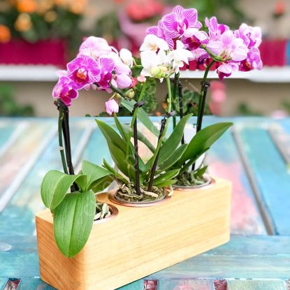Picture of Wood Flowerpot - Mojave